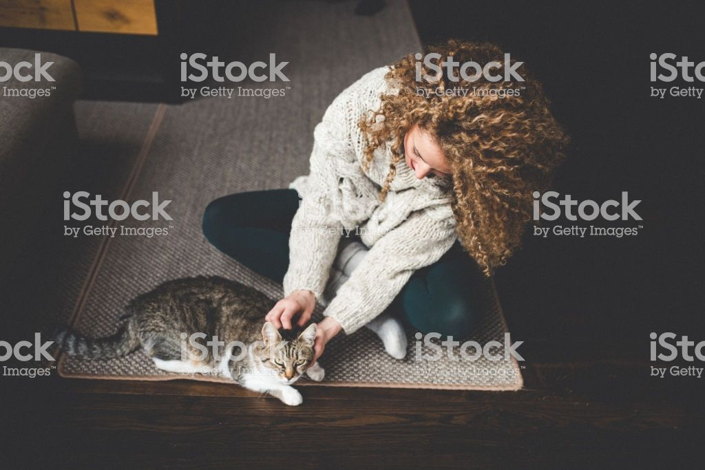 Owner playing with cute funny cat at home royalty free stock photo