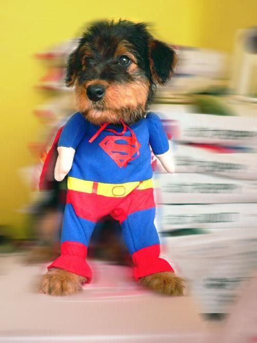 Best SUPER DOG CLOTH Dog Clothing Superman Costumes For Dogs Cute Pet Dogu0027s Clothes