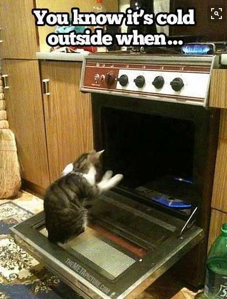 winter cat memes