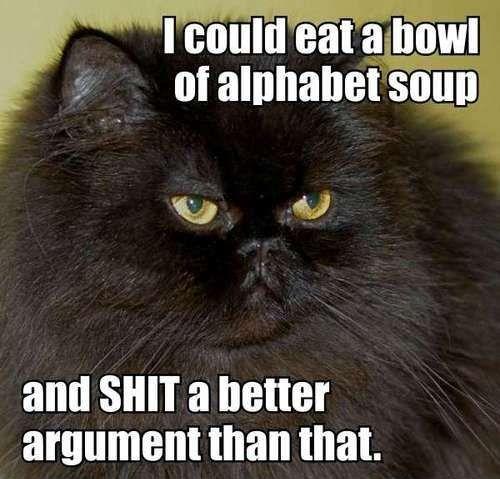 21 Funny Cat Captions