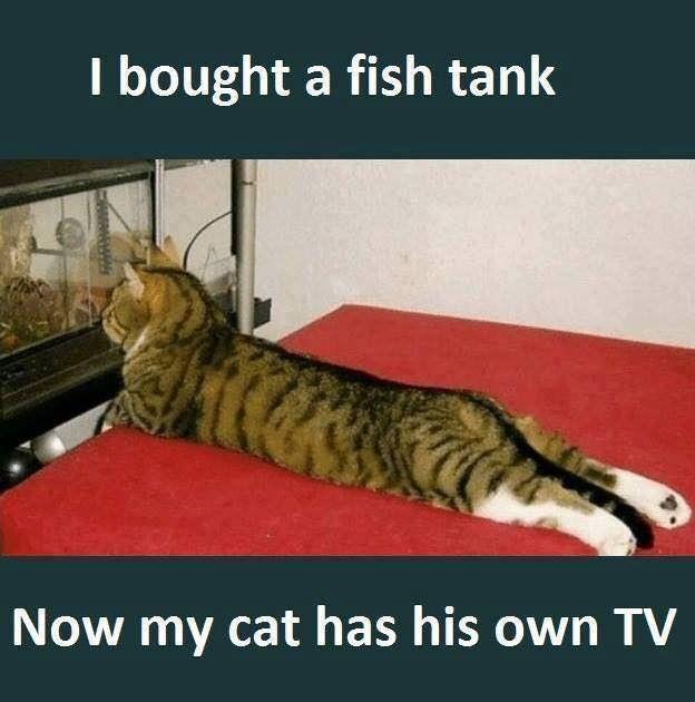 I bought a fish tank funny cat meme