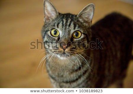 funny cat face profile