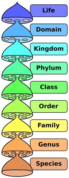 Mnemonic device for taxonomy biology Does King Phillip e Over For Good Soup Donna Barns · animal kingdoms