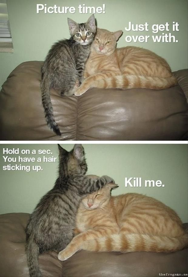 17 Best About Funny Cat Captions