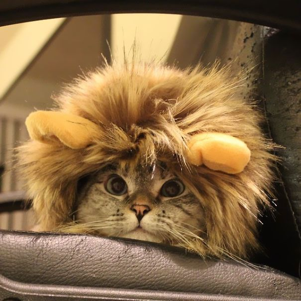 The Story Instagram s Most Famous Cat Nala Who Has 3 2M Followers