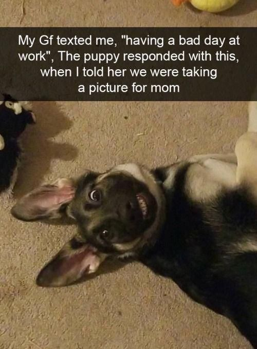41 Funny Dogs To Brighten Up Your Day cuteanimals
