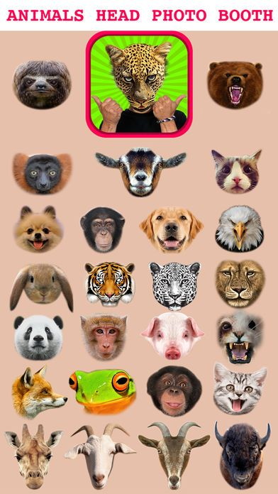 Screenshot 3 for Animal Head Sticker Booth Funny Animals Face Changer Montage Maker