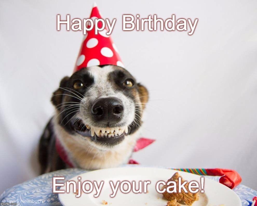 Birthday Dog Happy Birthday Enjoy your cake [Imgflip