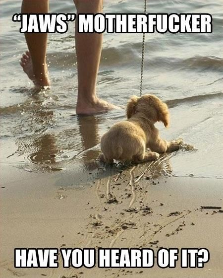 I agree with the dog even though I haven t seen Jaws I do love the beach and the ocean tho
