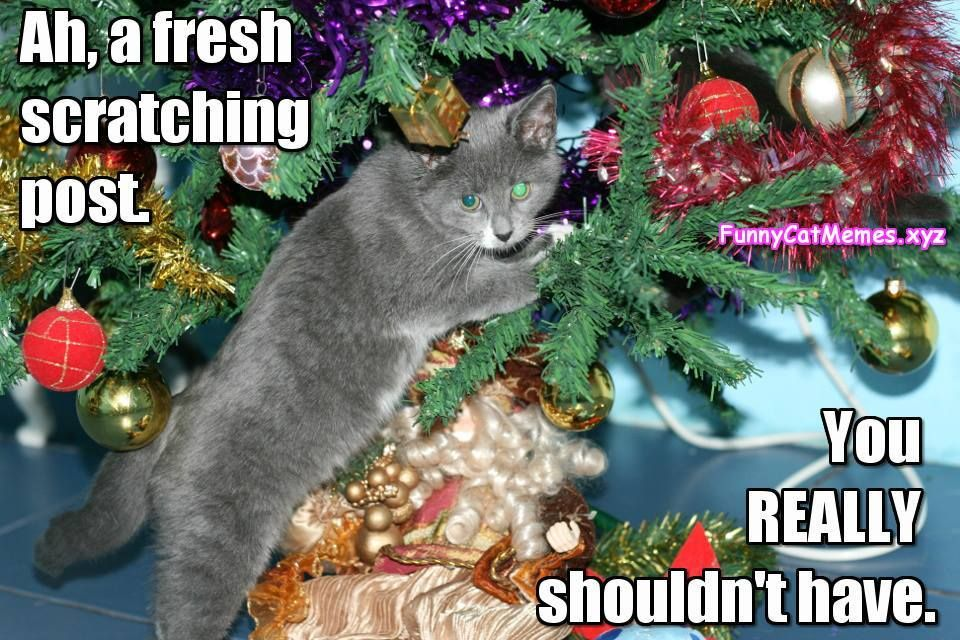 Cat Christmas Tree Meme Funny Cat memes
