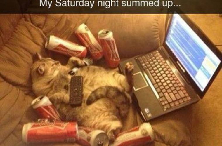 Gather the Lovely Funny Friday Night Cat Pictures and Quotes