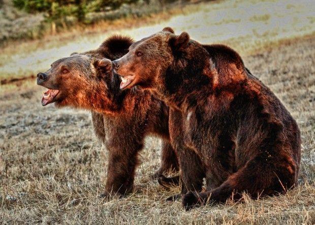 FWP seeks to revoke Animals of Montana menagerie permit