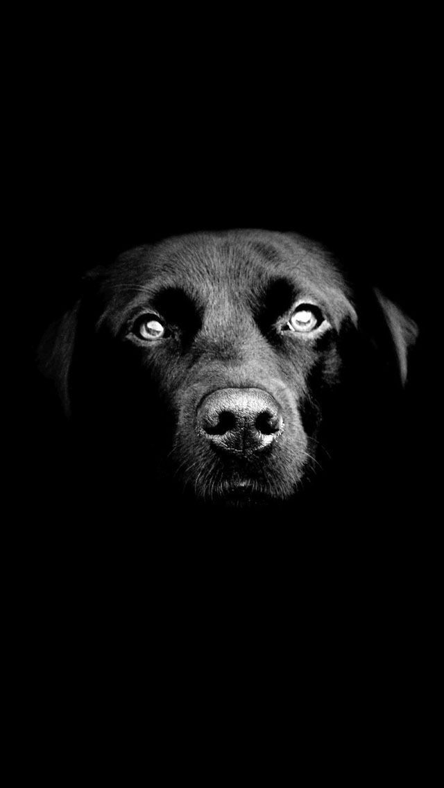 Adorable dog Black and white animals and nature iPhone wallpapers Tap to see more Apple iPhone HD Wallpapers mobile9
