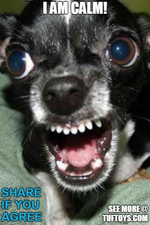 furious angry dog
