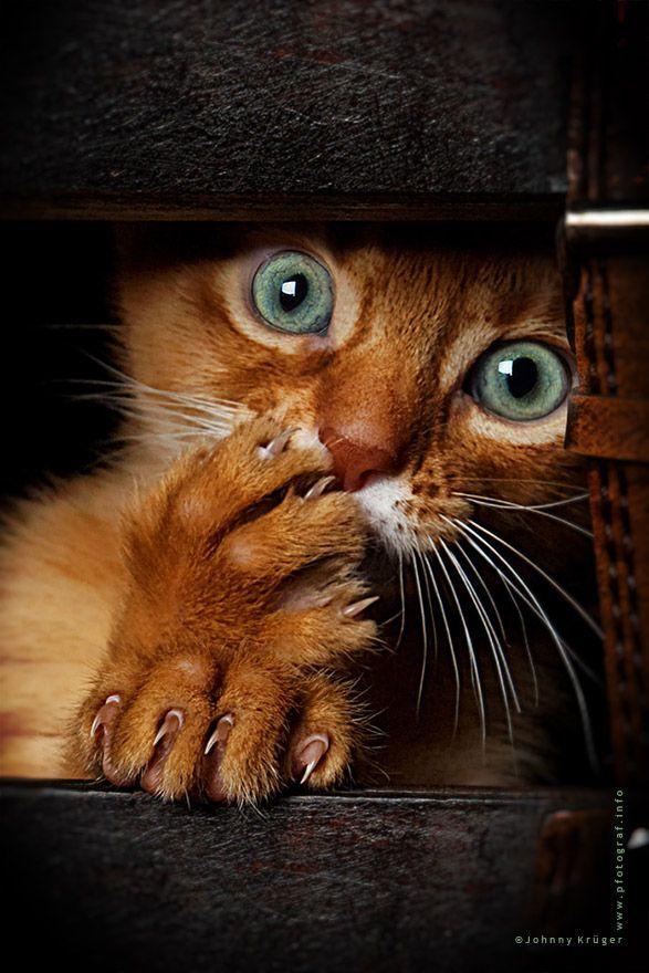 Los mejores fondos de escritorio Funny Animals Funny Cats Cute Animals Baby Animals