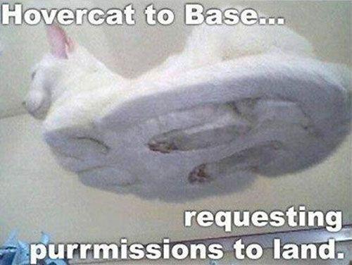 Cute Cat Captions Hover Cat