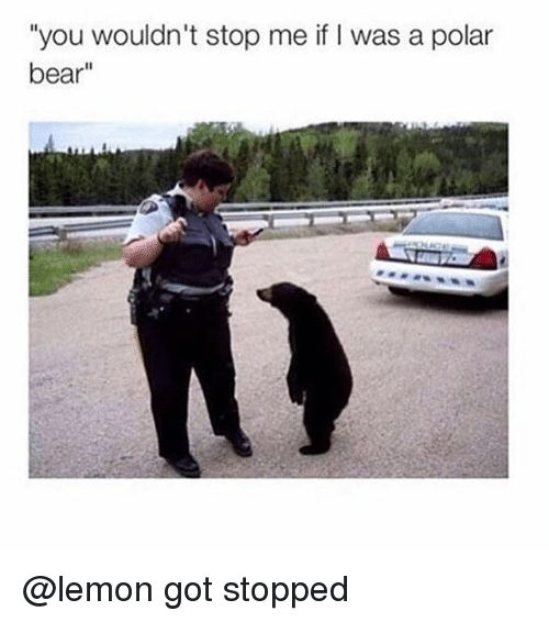 """Bear Bears and Dank Memes """"you wouldn t stop me if"""