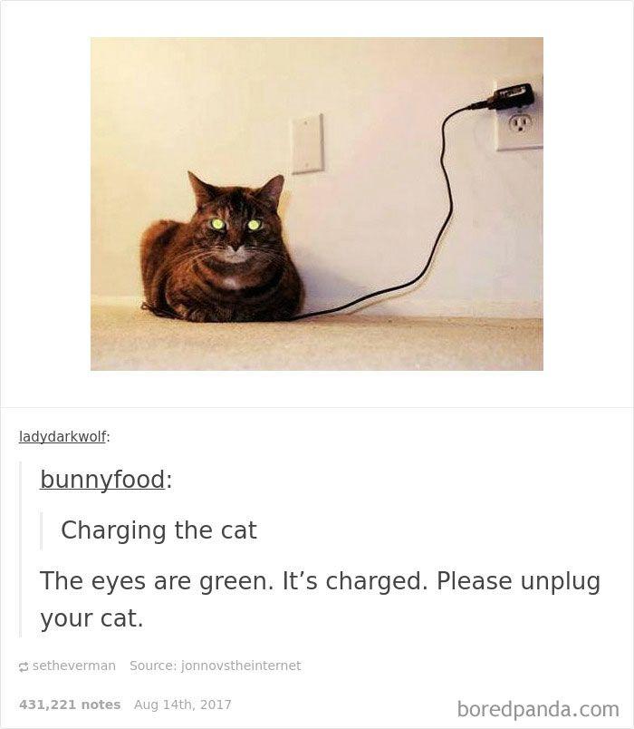 Funny cat pics tumblr