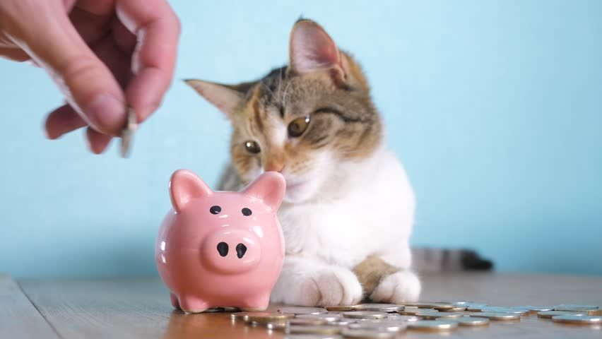 piggy bank and cat teamwork funny video money concept finance business accounting Money cat pet pile growing money and piggy bank hand puts coins in a