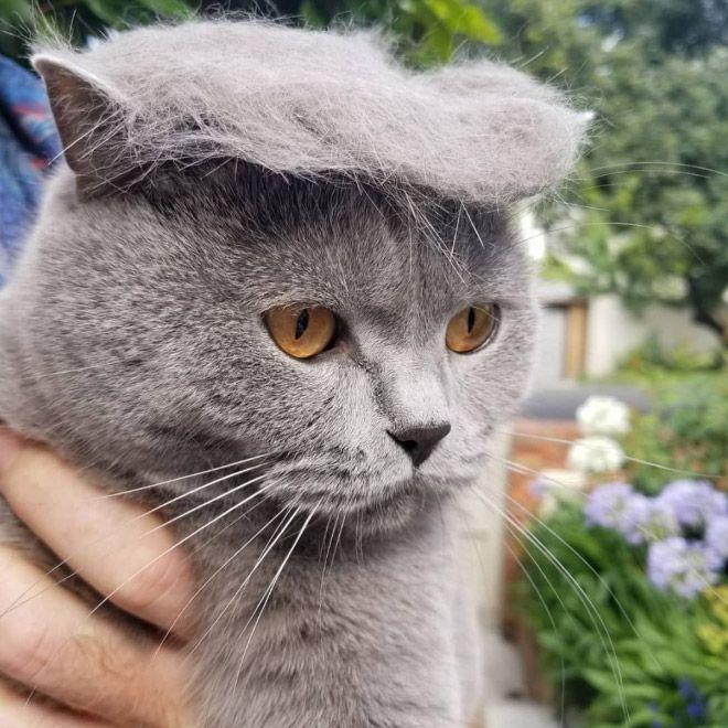 donald trump cat14