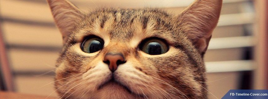 Im Watching You Funny Cat