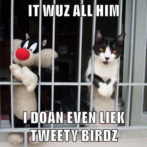 animals bars tweety bird Cats