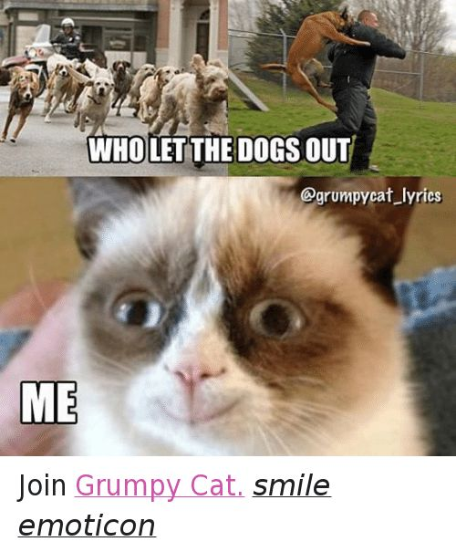 Cats Dogs and Grumpy Cat WHOLET THE DOGS OUT grumpy cat lyrics