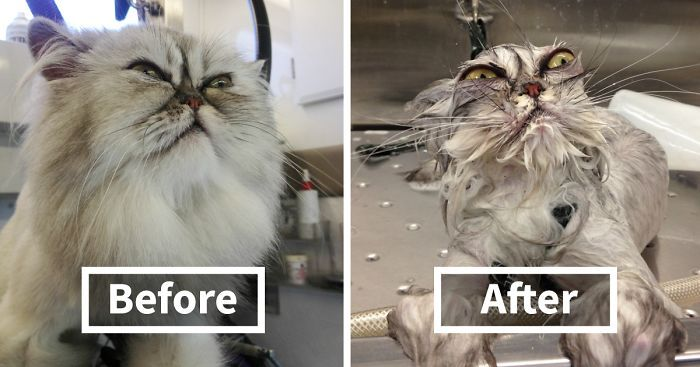 63 Hilarious Animals Before And After A Bath