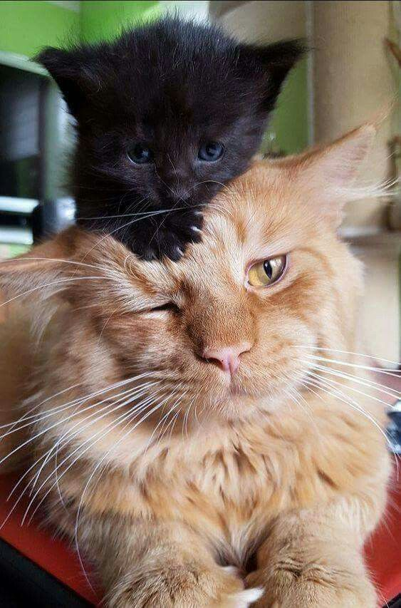 the For More Adorable and Cute Cat Videos and s cutecats cats kittens catvideos