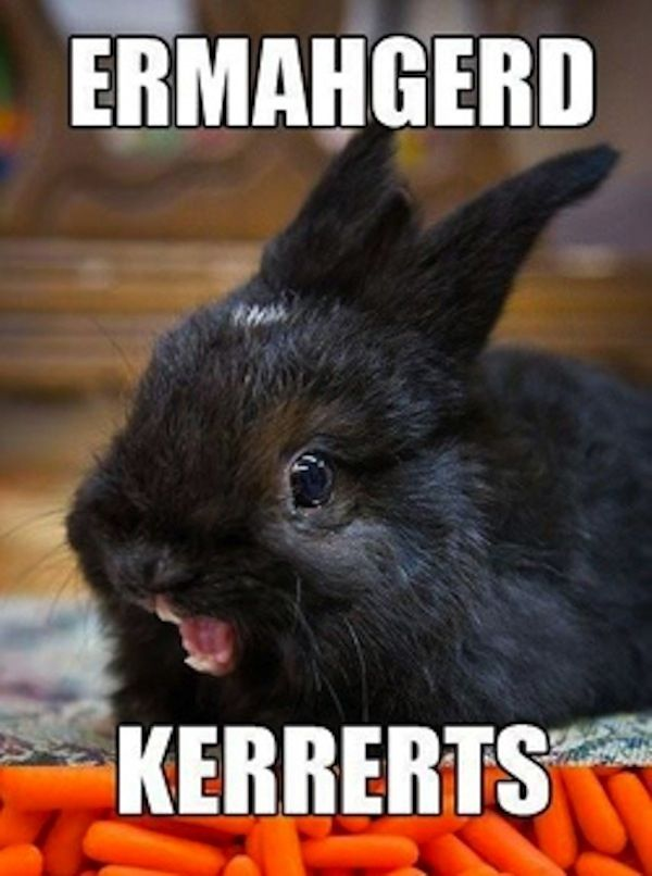Gather the New Cute Bunny Funny Animal Memes