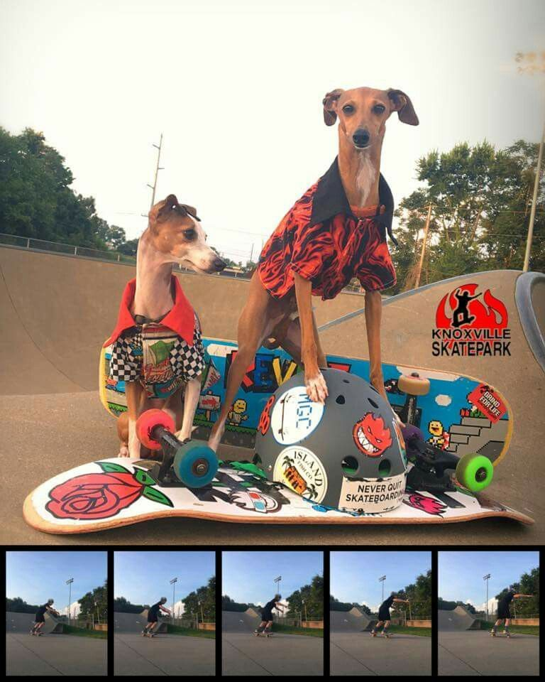 Cute Funny Animals Elk Summer and Moose adventures Follow Summer and Moose on Whippets Italian Greyhound Shiba
