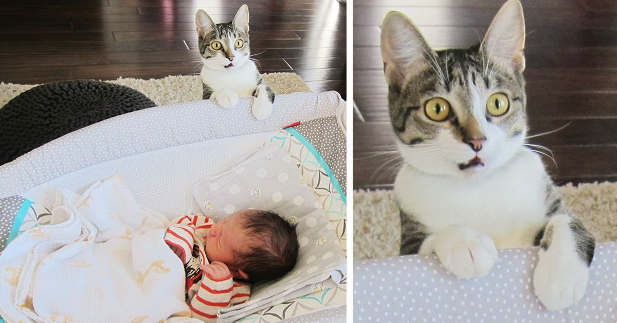 Couple Forgot To Tell Their Cat They d Just Had A Baby