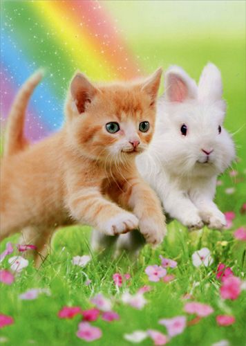 Details about Kitten And Bunny Friends Cat Easter Card Greeting Card by Avanti Press