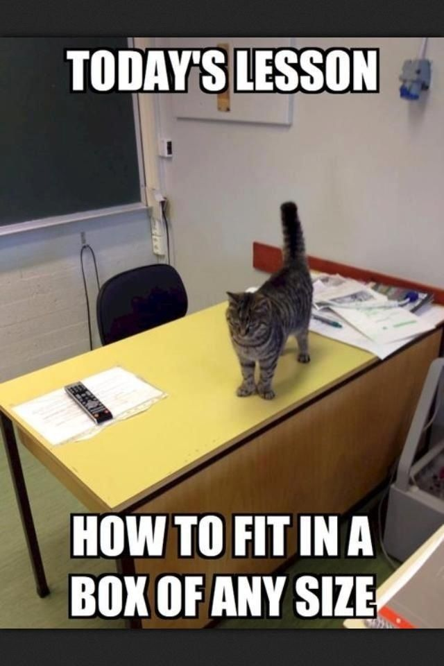 Funny animals Funny cats Funny animal pictures