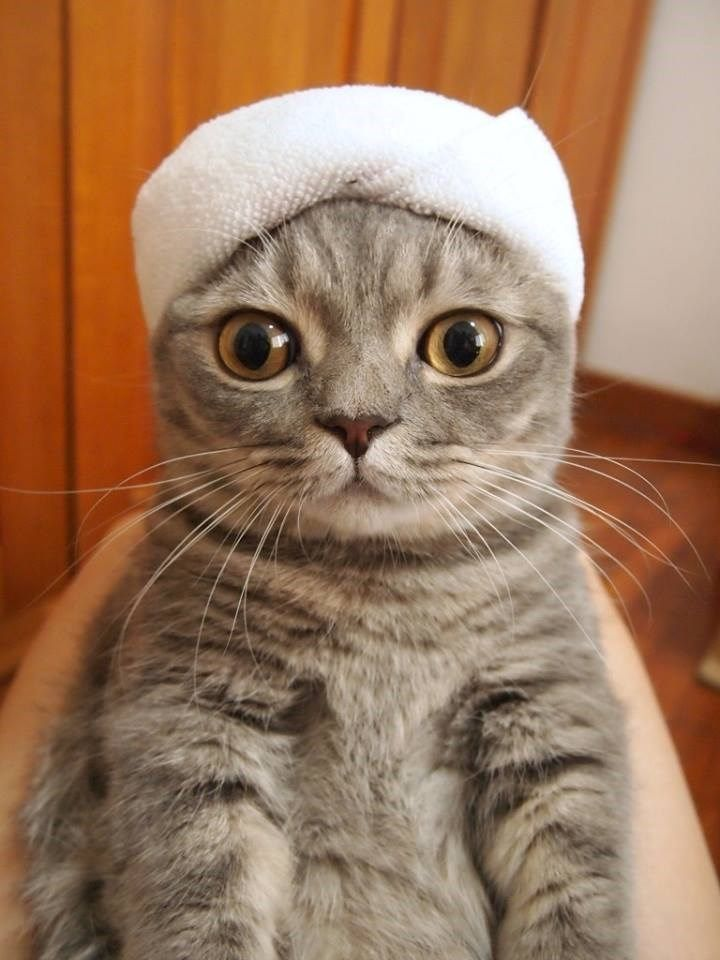 Cat wearing a towel s photoshopped into some hilariously weird situations Gallery