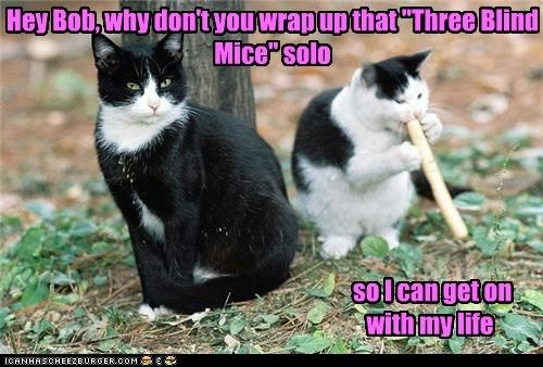 Music song solo three blind mice captions childrens song flute mice Cats