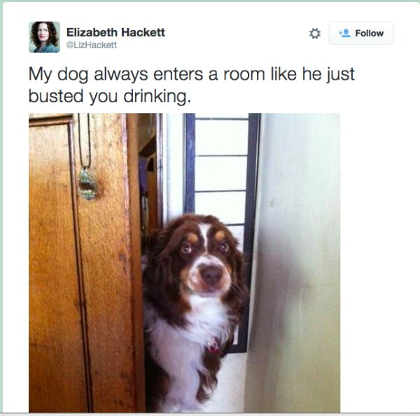 dogtweet6 lizhackett