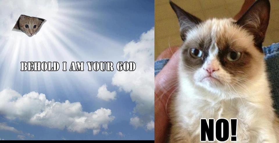 Grumpy Cat And GOD NO