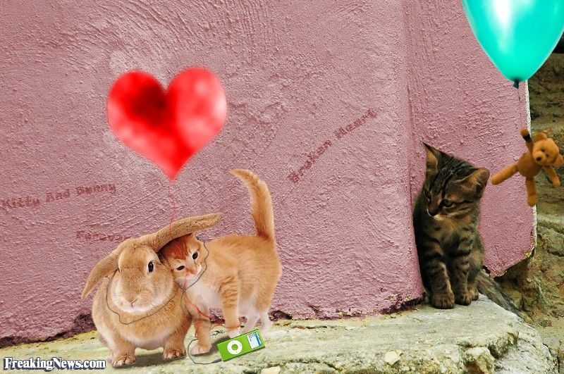 Lonely Cat Watching Another Cat in Love