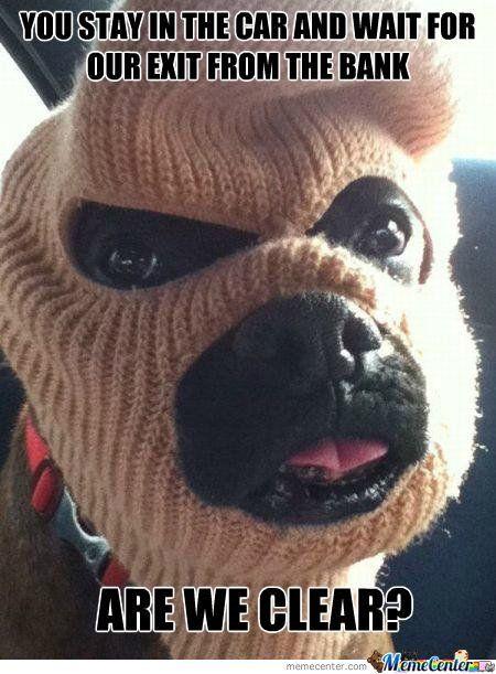 Cat burglar Meme Guy