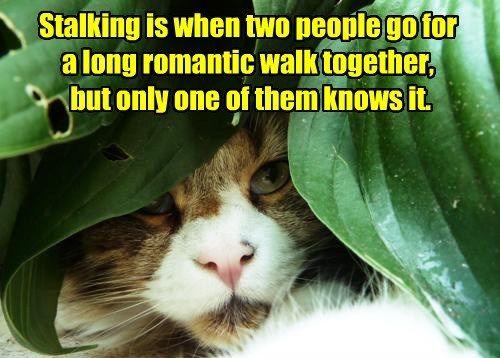 stalking walk love funny