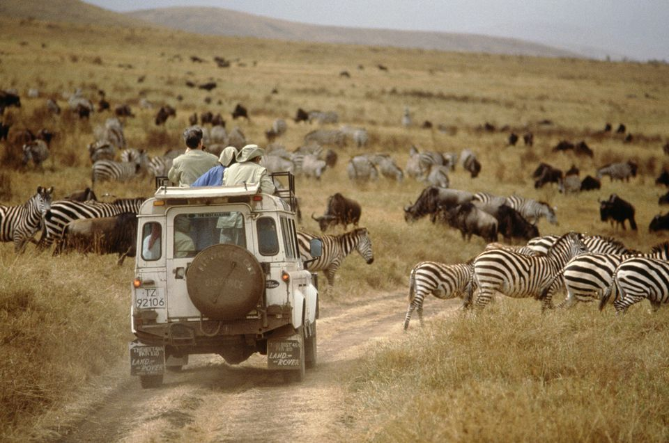 Surrounded by Wildlife on Safari