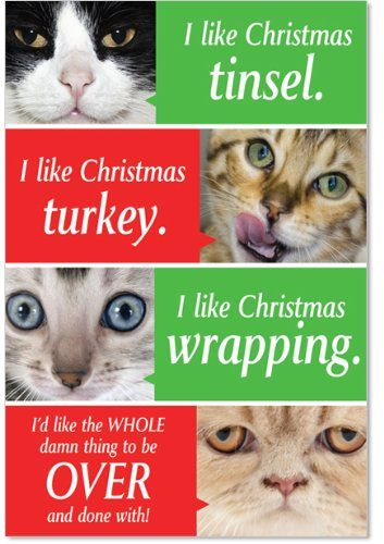12 Cats Getting Worried Boxed Christmas Cards with Envelopes 4 63 x 6 75 inch