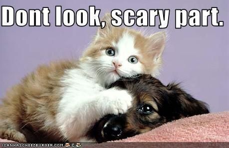 Animal Humor images cat & dog funny wallpaper and background photos