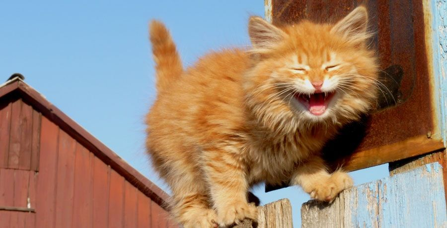 The Ultimate List of Punny Cat Names – 111 Hilarious Names