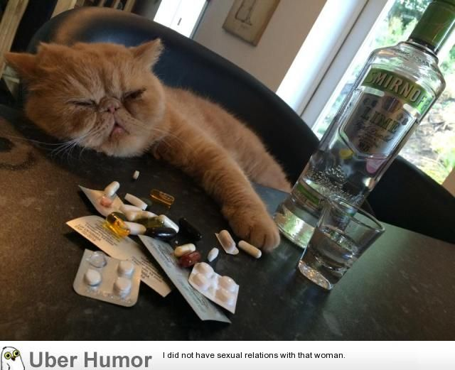 Gather the Prodigious Funny Cat Pictures Proips