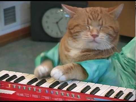 Funny cats and Keyboard Cat