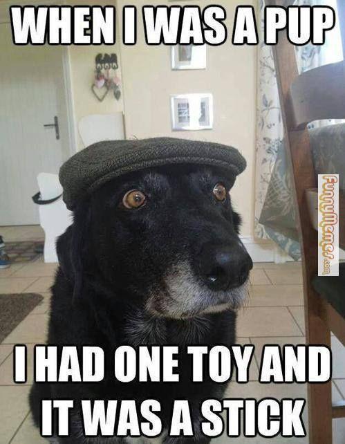 Gather the Prodigious Funny Dog Memes Mondays