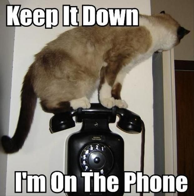 IRTI funny picture 2350 tags cat keep it down on the phone telephone sitting