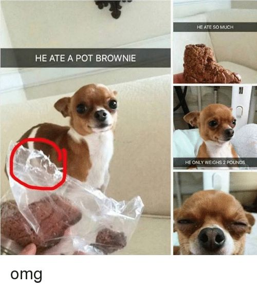 Memes Omg and 🤖 HE ATE A POT BROWNIE HE ATE SO MUCH